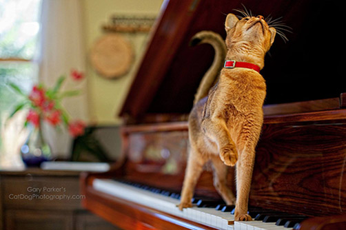 Cat Looking Up Piano