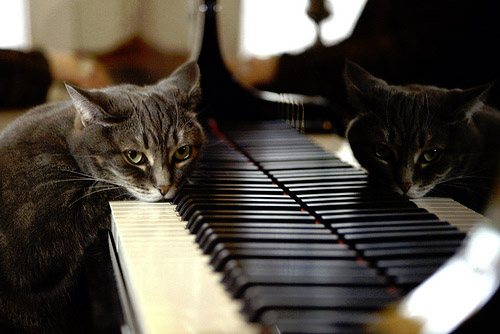 Cat Head Down on Piano
