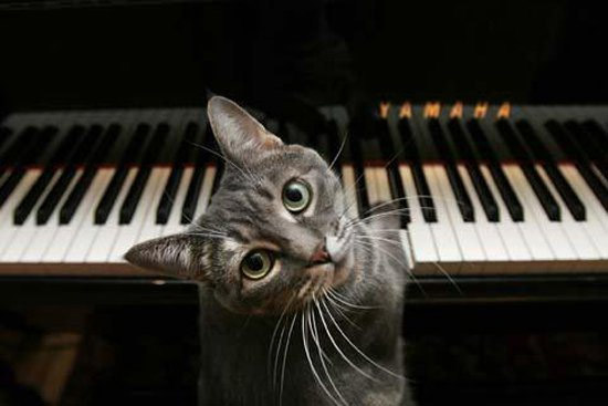 Cat Sitting on Piano